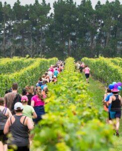Pegasus Bay Vine Run