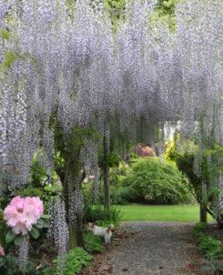 Ashburton's Blooming Beauty