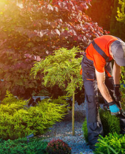 Oderings Landscaping